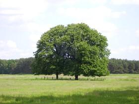 Naturpark Nuthe Nieplitz, zwei Bäume