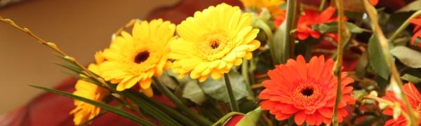 Blumen_1_600x400